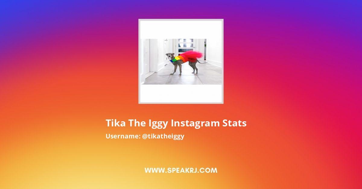 tika the iggy Instagram Stats
